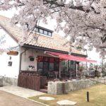 富山環水公園 桜満開です!
