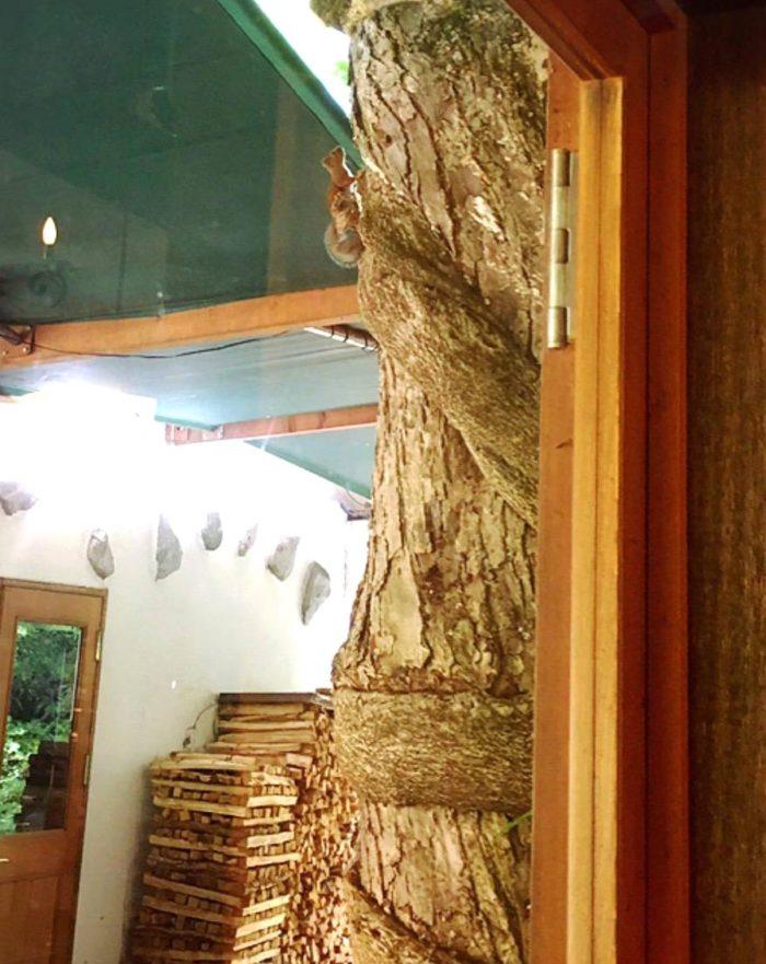 大源太ヴィチーニ 窓の外にリスが来ました。