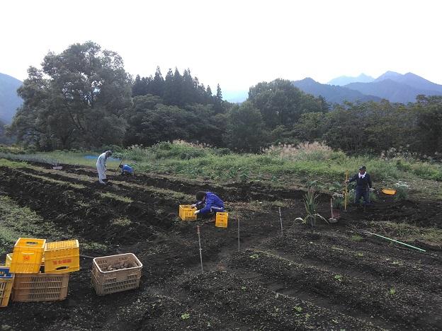ジャガイモの収穫:岩原